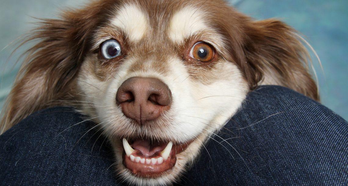 איך מתנהלים עם כלבים בבית משותף?
